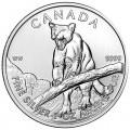 silver-cougar