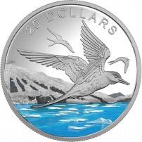 2017-1-oz-proof-canadian-silver-glistening-north-arctic-tern-rev